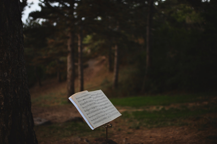 musical notes in the forest