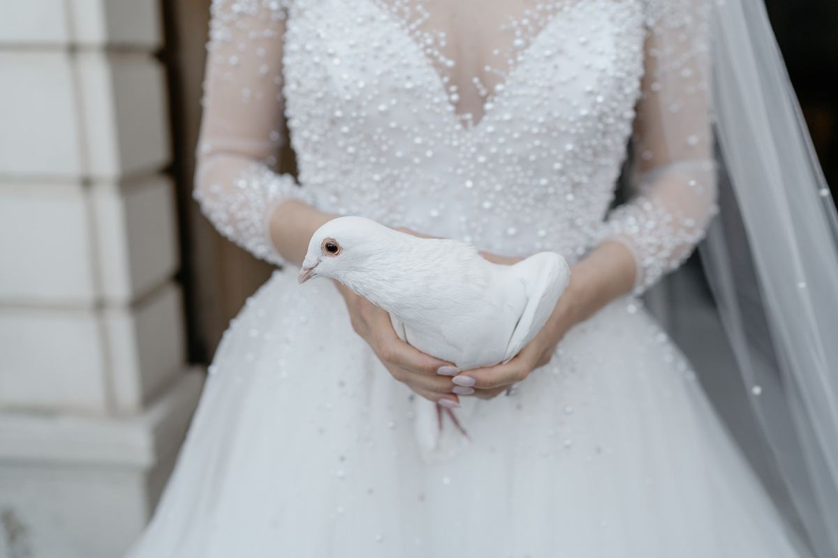 White dove in brides hand
